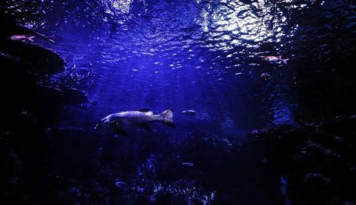 青の洞窟でシュノーケリングならネイチャーサービスマハエさんがおすすめ