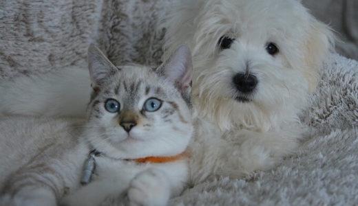 ペットを飼うならデメリットも理解して最後までお世話をしておくれ